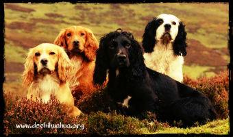 Perros de raza mediana de todos los colores