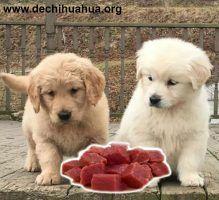 Dieta BARF para cachorros