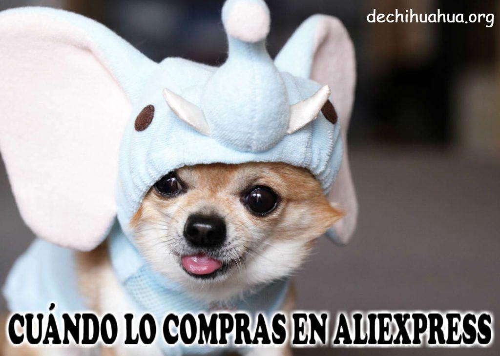 Chihuahua cuando lo compras en Aliexpress