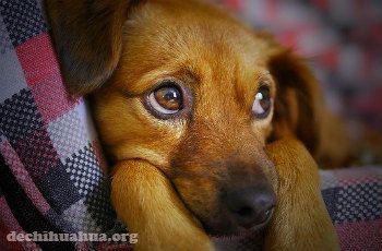 La conjuntivitis y los ojos sensibles son una enfermedad curable si se actúa con rapidez