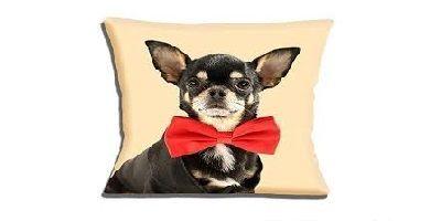 cojines de Chihuahuas