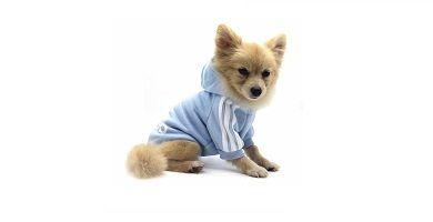 ropa ideal para Chihuahuas