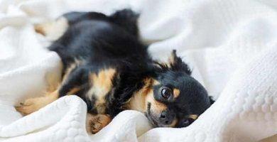 Por qué Chihuahua